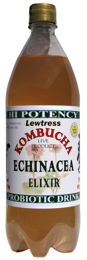 Lewtress Echinacea Kombucha Tea Probiotic Health Drink - 2 x 1 Litre Bottles